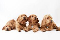 """Onze honden :: Kennel """"de Waaijpolder"""""""