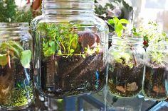 Scissors and Steam: Mason Jar Terrarium Tutorial. Might be a good way to grow an herbal garden on your windowsill