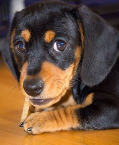hands off dog training formula | Great