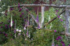 Cottage Garden on Fredholm