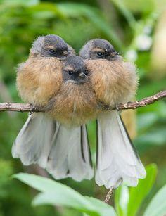 birds cuddling