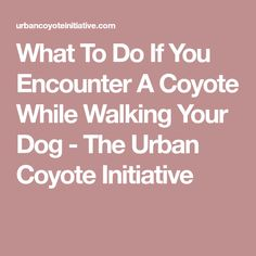 What To Do If You Encounter A Coyote While Walking Your Dog - The Urban Coyote Initiative