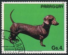 PARAGUAY -  1.983  Un sello impreso en PARAGUAY muestra un Dachshund.