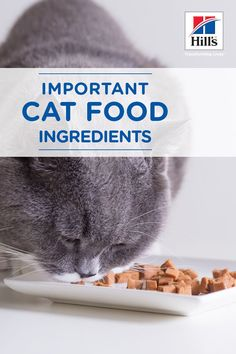 Providing your cat with a nutritious diet is essential to her health and quality of life. The best way to keep her healthy is to educate yourself about the best cat food ingredients and how they benefit your furry friend. Best Cat Food, Dry Cat Food, I Love Cats, Cool Cats, Sweet Cat, Cat Diet, Cat Nutrition, Nutrition Guide, Types Of Cats