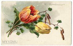 Duże zdjęcie 1928 Catharina C. Klein tulipan kwiaty Flowers