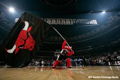 The official website of Benny The Bull, the mascot of the Chicago Bulls Benny The Bull, Chicago Bulls Team, Home Team, City, Sports, Spice, Daddy, Game, Random