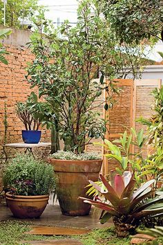 Também conhecida como cereja-da-mata-atlântica, a grumixama pode atingir até 15 m. Em vaso, como está neste jardim, seu tamanho é limitado pela oferta de espaço para as raízes. Projeto da paisagista Susana Bandeira, da Maria Flor Paisagismo