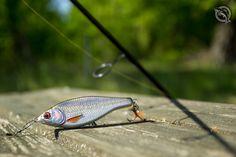 Savage Gear 3D Roach Jerkster #wędkarstwo #przynęty #jerkbait #savagear