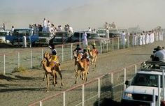 Sports   The most popular traditional sport in Oman, camel racing, still attracts a lot of people. Bedouin breed and train the camels for the races, which take place on racetracks and on makeshift courses in the open desert. Horse and even dhow racing are also sports thatenjoy strong competition. The elite practices