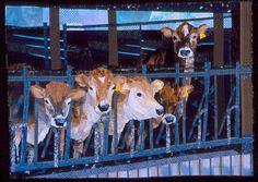 A group of jersey heifers in a shed at Fort Morrison Farm in Colrain, Massachusetts gave me a photograph which I used for the drawing from which this quilt was made. The girl on the right was most interested in who/what I was, the others were hoping for a handout.   The dark shadows of the shed with slanting light behind, and the repeated pattern of the stanchions make elements to combine with the personalities of the cows.