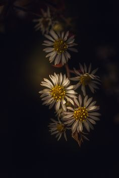 Paul Barson Photography » Holding On To The End