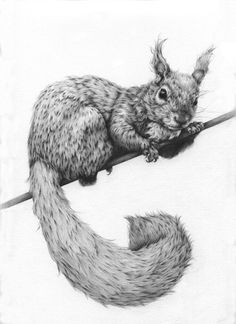 Vanessa Foley, Artist: Graphite Portfolio Such wonderful tenderness and feeling for the natural world.