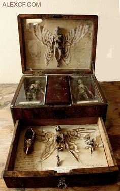 A very creepy DIY for a cabinet or antique lap desk of curiousities! Perfect for the front hallway or foyer for the Halloween party! Cabinet Of Curiosities, Magic Box, Assemblage Art, Weird And Wonderful, Macabre, Faeries, Shadow Box, Dark Art, Altered Art