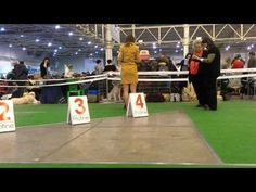 Puppy Class - Swedish lapphund Only You Sami-Ursus - YouTube