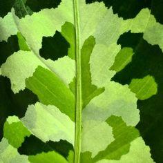 """346 Me gusta, 22 comentarios - Diseño Botánico (@jungle_________) en Instagram: """"🌿🎈 #festivaldehojas Vieron que este concurso no era para nosotros, era para ustedes, para que se…"""" 50 Shades, Shades Of Green, Tropical Plants, House Plants, Close Up, Plant Leaves, Photo And Video, Instagram, Pictures"""