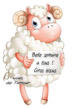 Bonne semaine image #5250 - Belle semaine à tous ! Gros bisous Tags: Belier, Drole, Mouton.