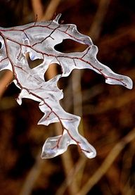But look it's ice and it's like an alien hand or something and the branch is like veins? Nature wrapping nature again Snow And Ice, Fire And Ice, Winter Magic, Winter Snow, The Magic Faraway Tree, Ice Art, Winter's Tale, Ice Sculptures, Winter Beauty