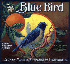 Blue Bird Brand Orange Crate Label, Sunny Mountain Orange Co. Vintage Diy, Vintage Labels, Vintage Ephemera, Vintage Cards, Graphics Vintage, Vintage Food, Vintage Ideas, Vintage Stuff, Vintage Shoes