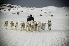 Iceland: Top 5 Winter and Summer Adventures, Dog Sledding
