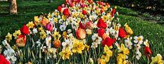 The Northern West Virginia Gardener: Wedding Flowers - Unique at West Farms in West Vir...