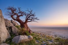 Gorgeous Baobab Tree!  makgadikgadi, Mark Dumbleton