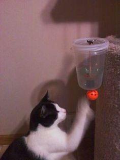 cat-feeder-