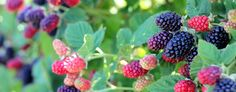 Simmons Plant Farm | Family owned and operated plant farm