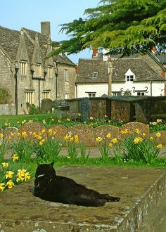 St. Sampson's Churchyard in Cricklade, Wiltshire with black cat in the sun.