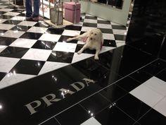 Roxy & Prada 2012 Photographer Jane Drake Hale
