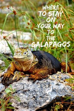 Planning a trip to the Ecuador and Galapagos Islands? All the information you need for the perfect spot in Guayaquil to stay with airport transfer included.