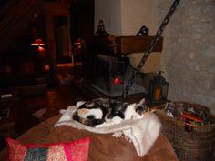 Il fait bon près du feu #chat #cat #chambredhote #cheminee #bandb #cute #mignon #tarn #castelnaudemontmiral #gaillac http://lamaisonduchai.com/accueil.html