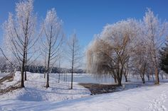 Havas-zúzmarás Január - Snowy frosty January