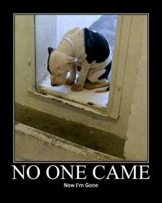 No One Came. Now I'm Gone. A strong case for Pet Adoption. What happens when an animal is taken to a shelter. They should really call it death camps. We can't always blame the shelter, they don't always have the funds or staff. Please spread this. This is heart breaking.