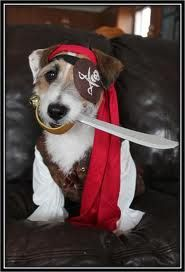 Jack Russels really are the pirates at the door :)