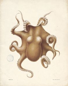 My Octopi Obsession Grows