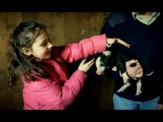 Gordon and Family Visit Baby Piglets - Gordon Ramsay Baby Piglets, Chef Gordon Ramsay, Recipes, Little Pigs
