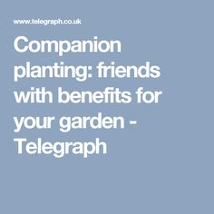 Companion planting: friends with benefits for your garden - Telegraph