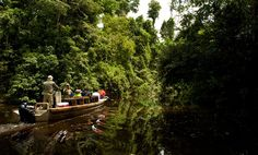 deep in the rain forest #amazonriver #AquaExpeditions #quest4adv