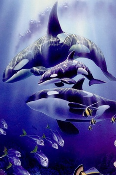 Orcas fact: theyre not whales, they're actually dolphins!
