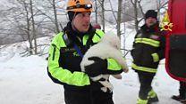 GALERINHA INFANTIL: Filhotes de cães resgatados com vida em hotel atin...