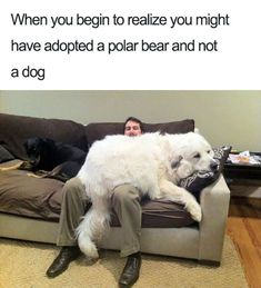 Tagged with funny, cute, dogs, memes, aww; Shared by dog memes that will make your day Funny Dog Memes, Funny Animal Memes, Cute Funny Animals, Funny Animal Pictures, Cute Baby Animals, Funny Cute, Funny Dogs, Meme Pictures, Pet Memes