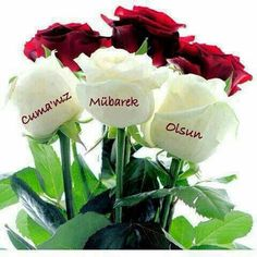 Red and white roses Flower Vases, Flower Arrangements, Welcome New Members, Red And White Roses, Be Gentle With Yourself, Sweetest Day, Book Of Shadows, Spring Garden, Happy Weekend