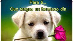 imágenes de buenos-días-hermosa Labrador Retriever, My Love, Memes, Dogs, Animals, Google, Gud Morning Images, Good Day Quotes, Imagenes De Amor