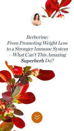 Key Health, Health And Wellness, Melt Belly Fat, Cellular Level, Ldl Cholesterol, Insulin Resistance, Flu Season, Hormone Balancing, Boost Your Metabolism