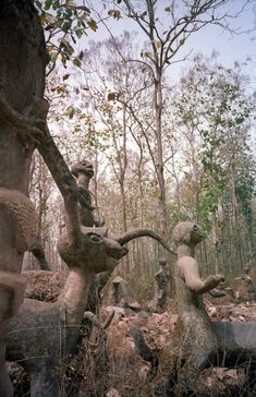 Osun Sacred Grove on the outskirts of Osogbo, is one of the last remnants of primary high forest in southern Nigeria. The abode of the goddess of fertility Osun, the landscape of the grove & its river is dotted with sanctuaries & shrines, sculptures & art works in honour of Osun & other deities. The sacred grove which is now seen as a symbol of identity is probably the last in Yoruba culture. It testifies to the once widespread practice of establishing sacred groves outside all settlements.