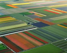 Holland's flower farms: Now that's awesome striping!