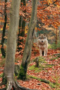 Gorgeous picture, but I'd be completely freaked out if I was on an autumn walk and saw this in front of me.