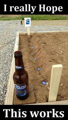 Beer Planting
