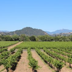SONOMA: EVERY AMENITY AT EVERY WINERY ON THE WINE ROAD --  here's a round-up of every single winery on Sonoma County's 190-winery-strong Wine Road, broken down entirely by their amenities. Free wine tasting crawl, anyone?