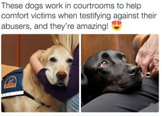 what did humans do to deserve dogs http://animalbuzzer.com/what-did-humans-do-to-deserve-dogs/